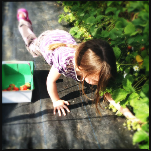 PYO strawberry picking is great for kids
