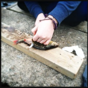 How to clean a perch