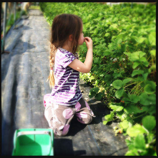 Eating strawberries straight from the bush (just don't get caught!)