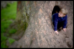 How to make a hollow tree den