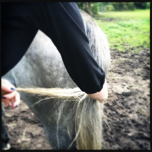 Getting horse hair