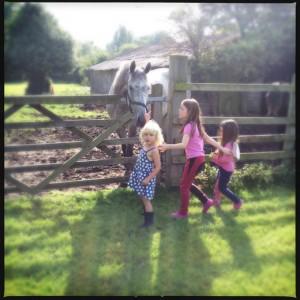 Visiting race horses